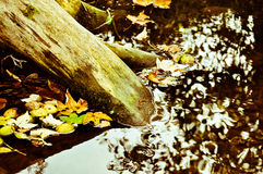Autumn on the water. Roots in the water in autumn Royalty Free Stock Photos
