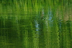 Autumn water. Green autumn water with inverted reflection and riffle Royalty Free Stock Images