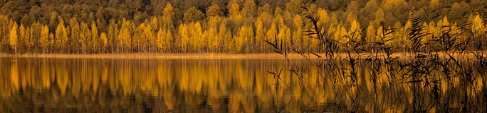 Autumn at the water shore Royalty Free Stock Photo