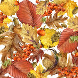 Autumn watercolor background colorful leaves. Fruit, berries, mushrooms, yellow leaves, rose hips. watercolor illustration Royalty Free Stock Images