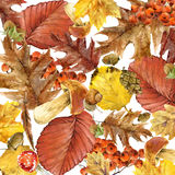 Autumn watercolor background colorful leaves. Fruit, berries, mushrooms, yellow leaves, rose hips. watercolor illustration Royalty Free Stock Photo