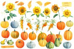Autumn watercolor clipart. Pumpkins, sunflowers, sea buckthorn on a white isolated background.