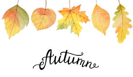 Autumn watercolor illustration with colored leaves and hand lettering. Autumn watercolor illustration with colored leaves and hand lettering on a white Stock Images