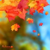 Autumn watercolor leaves on blurred photo Stock Photo
