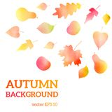 Autumn watercolor leaves, vector illustration. Royalty Free Stock Images