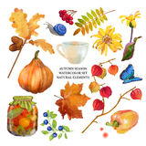 Autumn Watercolor Natural Collection. Autumn watercolor collection of fall leaves and nature elements on white background royalty free stock photo