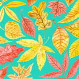 Autumn watercolor pattern Royalty Free Stock Image