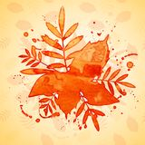 Autumn watercolor rowan leaves and spray, vector Stock Photo