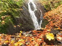 Autumn waterfall in basalt rock. Shinning streams and many colorful leaves on banks. View into autumn waterfall in basalt rock. Shinning streams and many Stock Photo