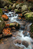 Autumn waterfall. Autumn brook with stones and colored leaves Royalty Free Stock Images