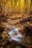 Autumn waterfall  flow. Stock Image