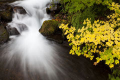 Autumn Waterfall, nature stock photography. Long exposure of a waterfall and autumn colored leaves in the Columbia Gorge area of Oregon Stock Photos