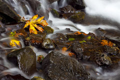 Autumn Waterfall, nature stock photography. Autumn colored leaves in the middle of a stream in the Columbia Gorge area of Oregon Royalty Free Stock Photography
