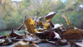 Autumn, waterfalls and streams, foliage stock footage