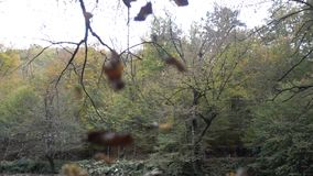 Autumn, waterfalls and streams stock video footage