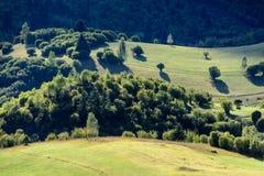 Autumn Wavy Field foto de archivo libre de regalías