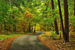 Autumn way. View of forest way in autumn period in month October Royalty Free Stock Photography