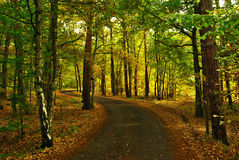 Autumn way. View of forest way in autumn period in month October Royalty Free Stock Photos