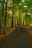 Autumn way. View of forest way in autumn period in month October Royalty Free Stock Images