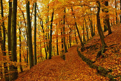 Autumn way Royalty Free Stock Photo