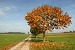 Autumn way stock photo