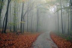 Autumn way Royalty Free Stock Image