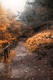 Autumn way. In the orange foliage Stock Photos