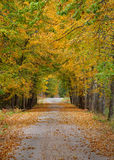 Autumn way. Stock Images