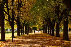 Autumn Way, Vigeland Park Stock Photo