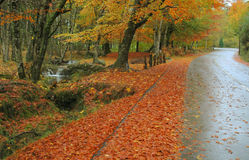 Autumn ways. In the national park of the gerês in Portugal Stock Images
