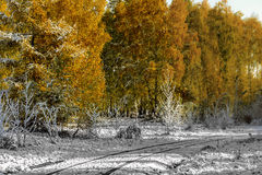 autumn wcześniej Zdjęcie Royalty Free