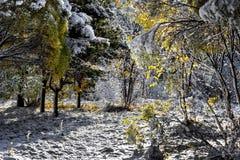 autumn wcześniej Fotografia Stock