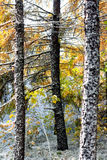 autumn wcześniej Obraz Stock