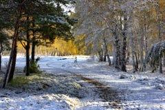 autumn wcześniej Zdjęcia Stock