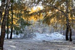 autumn wcześniej Obrazy Stock