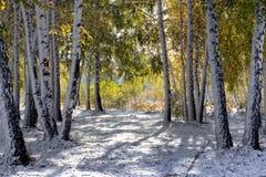 autumn wcześniej Zdjęcie Stock