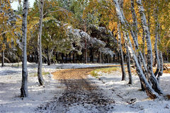 autumn wcześniej Obraz Royalty Free