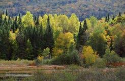 autumn wcześniej las Fotografia Royalty Free