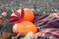 Autumn wealth - vegetables and paints of the nature royalty free stock photos