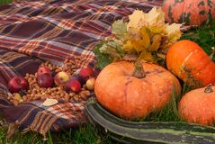 Autumn wealth - vegetables and paints of the nature stock photography