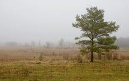Autumn weather. Cold grey fog Stock Photos