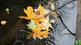 Autumn leaves. Autumn weather brings cooler temperatures and fall colors Stock Photos