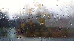Autumn. stock video footage