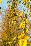 Autumn weather, forest Royalty Free Stock Image