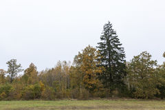 Autumn weather, forest Stock Image