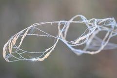 Autumn web on a blade. In morning fog Stock Photos