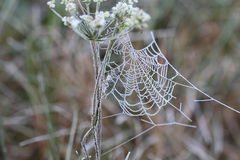 Autumn web. In a gate aperture Royalty Free Stock Photography