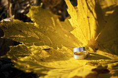 Autumn wedding rings royalty free stock image