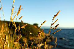 Autumn weeds Royalty Free Stock Images