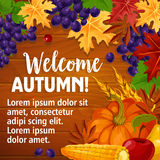 Autumn or Welcome Fall vector poster of foliage harvest. Welcome Autumn poster of fall harvest and seasonal foliage on wooden background. Vector pumpkin, grape Royalty Free Stock Photo